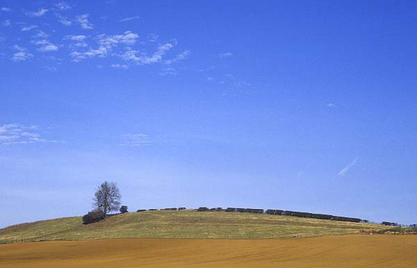 Landscape with Tree, near Billesdon, Leicestershire