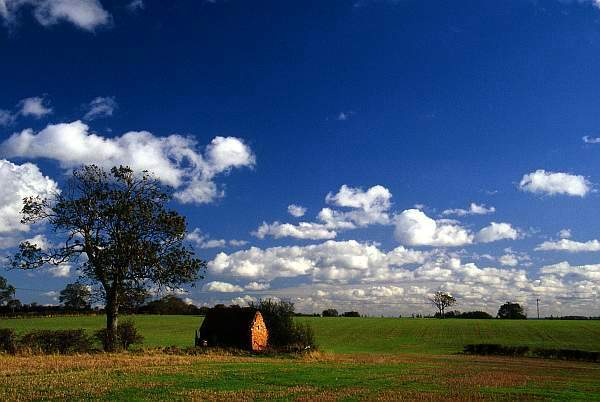 Landscape with Tree and Barn, near Melton Mowbray, Leicestershire