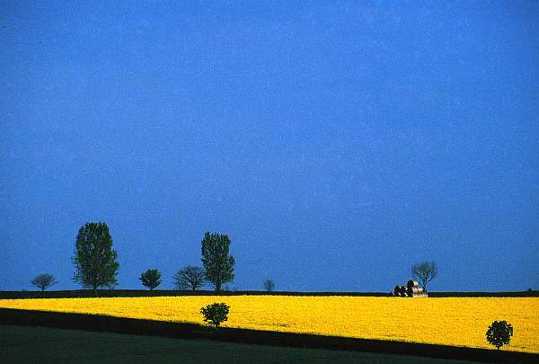Blue, Yellow and Green Landscape, Leicestershire