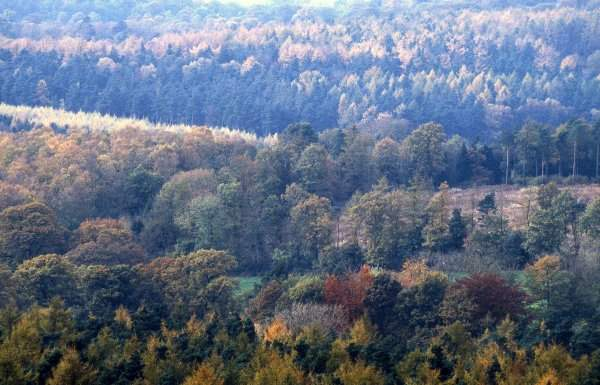Charnwood Forest in Autumn