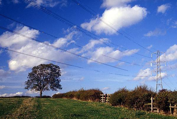 Landscape with Tree and Electricity Line, near Melton Mowbray, Leicestershire