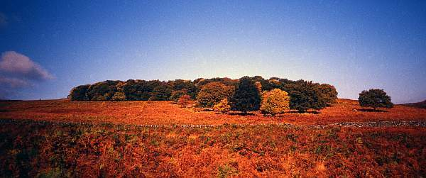 Autumn Landscape Panorama in Bradgate Park, Leicestershire